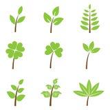 被设置的绿色叶子 免版税图库摄影