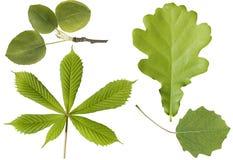 被设置的绿色叶子 免版税库存照片