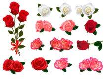 被设置的美丽的大玫瑰 向量例证
