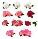 被设置的美丽的玫瑰 皇族释放例证