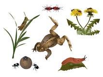被设置的自然-小动物和植物群 免版税库存照片