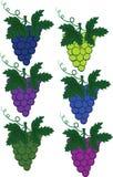 被设置的葡萄 库存照片