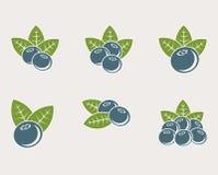 被设置的蓝莓 向量 库存照片