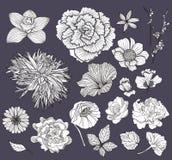 被设置的要素花卉花 免版税库存图片