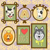 被设置的逗人喜爱的狗 牛头犬,小狗,猎犬,西伯利亚爱斯基摩人,布尔得利亚,法国牛头犬 库存照片