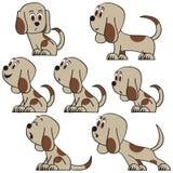 被设置的逗人喜爱的狗 免版税库存照片
