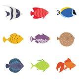 被设置的逗人喜爱的鱼例证象 热带鱼,海鱼,水族馆在白色背景隔绝的鱼集合 免版税库存图片
