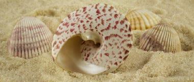 被设置的贝壳 免版税库存照片