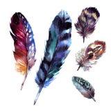 被设置的水彩羽毛 免版税库存照片