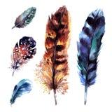 被设置的水彩羽毛 库存图片