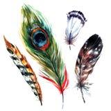 被设置的水彩羽毛 免版税库存图片