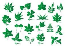 被设置的绿色叶子和植物 免版税库存照片