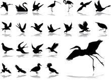 被设置的2个大鸟图标 库存照片