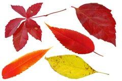 被设置的3片秋天叶子 免版税库存照片