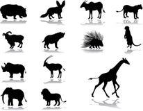 被设置的38个动物图标 免版税库存图片