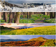 被设置的4个横向季节 免版税库存图片