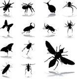 被设置的79只图标昆虫 库存照片
