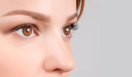 被设色的背景秀丽蓝色概念容器装饰性的深度详细资料域充分的仿效宏观自然超出珍珠浅天空 美丽的女性棕色眼睛 免版税库存图片