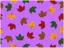被设计的叶子的各种各样的颜色有有些孔 皇族释放例证