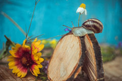 被转动的蜗牛 免版税图库摄影