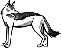 被返回的黑色狐狼 向量例证
