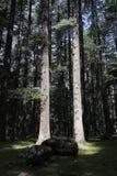 被迷惑的森林光魔术 免版税库存图片
