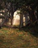 被迷惑的森林场面 图库摄影