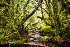 被迷惑的森林的细节南方的carretera的,树丛enca 免版税库存图片