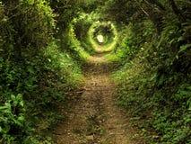 被迷惑的森林路径隧道 免版税库存图片