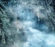 被迷惑的森林路 库存照片
