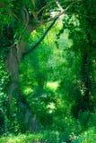 被迷惑的森林 免版税库存图片