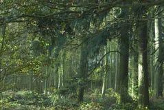 被迷惑的森林 库存图片