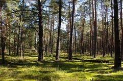 被迷惑的森林 免版税库存照片