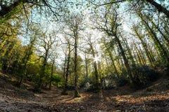 被迷惑的森林 库存照片