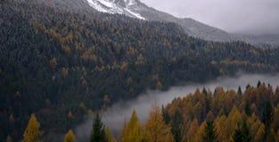 被迷惑的森林 图库摄影