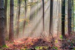 被迷惑的秋天森林 库存图片
