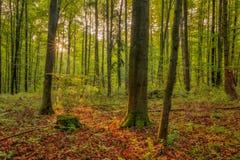 被迷惑的秋天巴伐利亚人Forrest 免版税库存照片