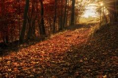 被迷惑的秋天Forrest 图库摄影