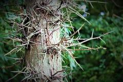 被迷惑的结构树 库存图片