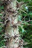 被迷惑的结构树 免版税图库摄影