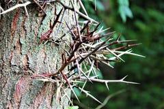 被迷惑的结构树 免版税库存照片