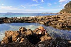 被迷惑的Rockpool Jervis海湾 库存图片