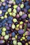 被选择的橄榄和叶子 免版税图库摄影