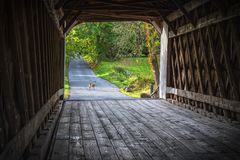 被遮盖的桥鹿 图库摄影