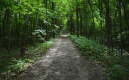被遮蔽的山地森林足迹 免版税库存照片