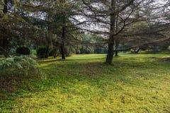 被遮蔽的象草的草坪在温暖的冬天早晨 库存图片