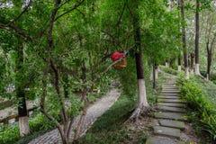 被遮蔽的路面在嫩绿的夏天森林 库存照片