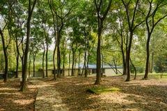 被遮蔽的路面在森林在晴天 免版税库存图片