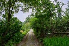 被遮蔽的countryroad在嫩绿的晴朗的夏天 免版税库存照片