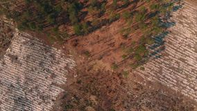 被采伐的森林顶视图  股票视频